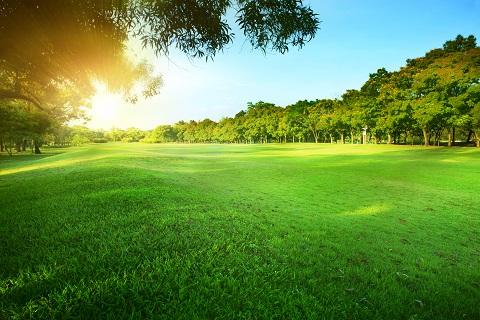 morning sun shining over green park