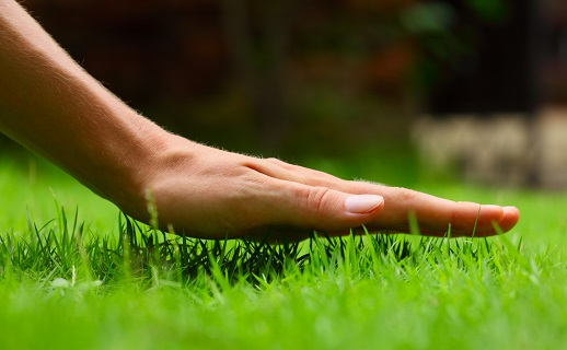hand above lush, green grass