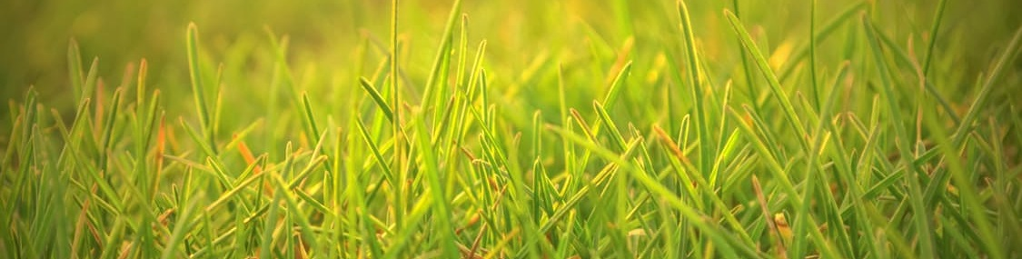 Other lawn fertilization companies cannot beat ExperiGreen Lawn care's comprehensive grass fertilization program. You and your envious neighbors will watch your turf become gorgeously green.