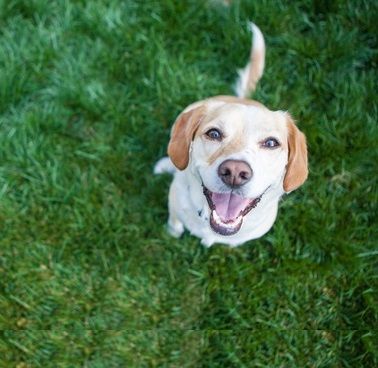 Protect your pets, family, and friends with flea and tick control from ExperiGreen Lawn Care.