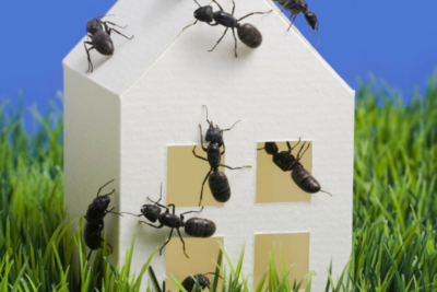 Perimeter Pest Control Stops Bugs Before They Come In