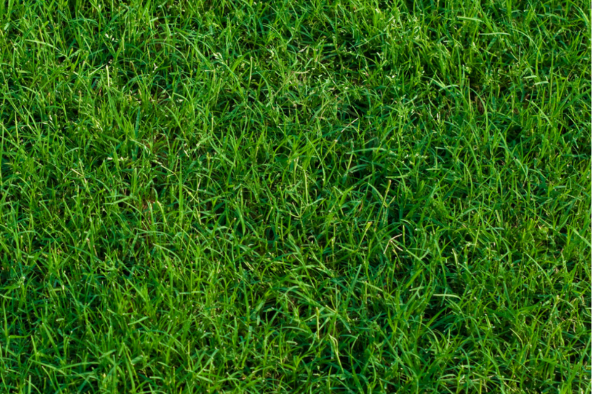 Lawns Improve Our Environment