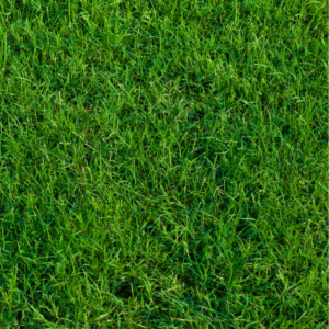 Best pre-emergent for bermuda grass in the Fall