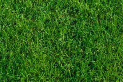 Common Lawn Diseases on Tall Fescue & Bermuda Grass in the Carolinas