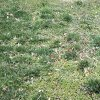Lawn fungus control from ExperiGreen Lawn Care can keep your lawn from looking patchy and unhealthy.