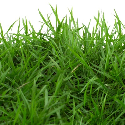 Lush, green grass can be yours with lawn aeration and overseeding from ExperiGreen Lawn Care.