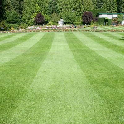 cutting stripes in lawn