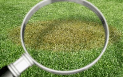 How to Identify Lawn Diseases