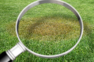 Top 5 Lawn Diseases That May Be Attacking Your Grass