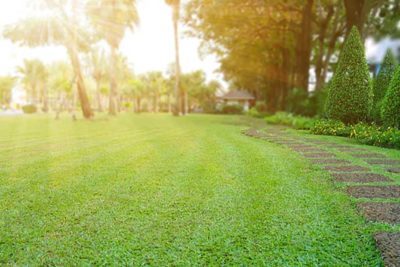 Repairing Summer Lawn Damage