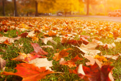 Top Fall Landscaping Tips To Get Your Lawn Ready For Winter