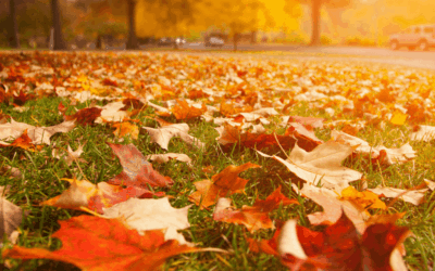 How to Winterize Your Yard and Gardens in Fall