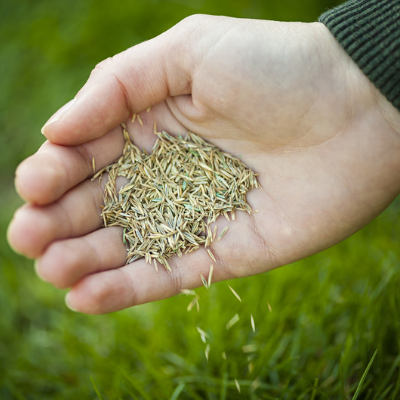 fall landscaping overseed to keep your lawn lush