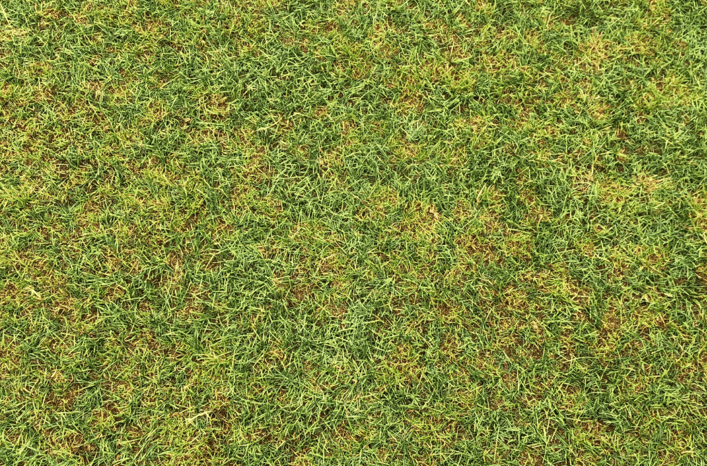 Benefits of Aeration & Overseeding