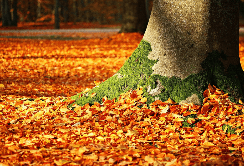 Fall Lawn Maintenance Tips