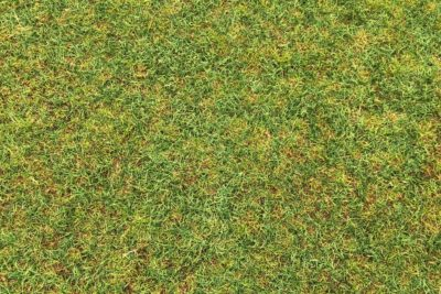 Aeration & Overseeding Benefits