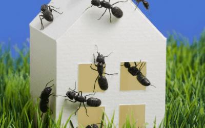Perimeter Pest Control Service