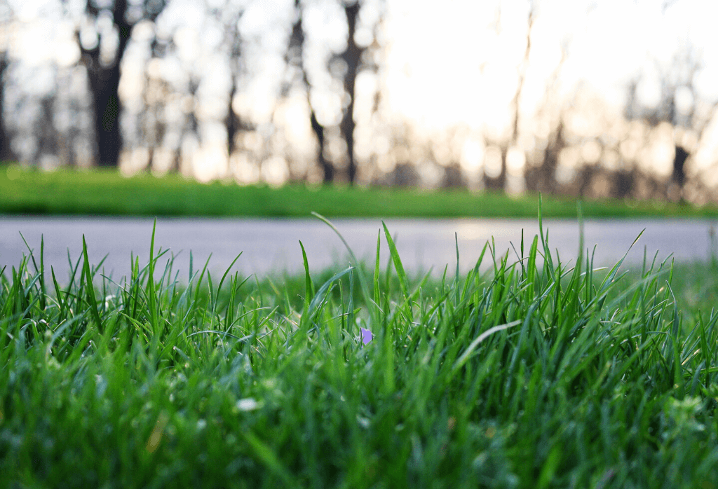 Healthy Lawn During Summer