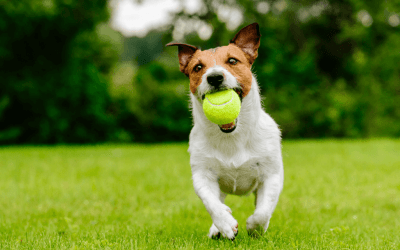 Pets and Lawn Pesticide Use