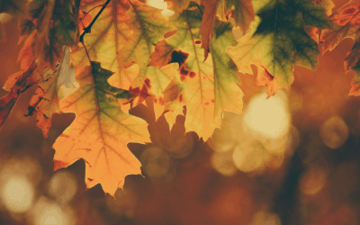 Tree-Planting Tips for Fall