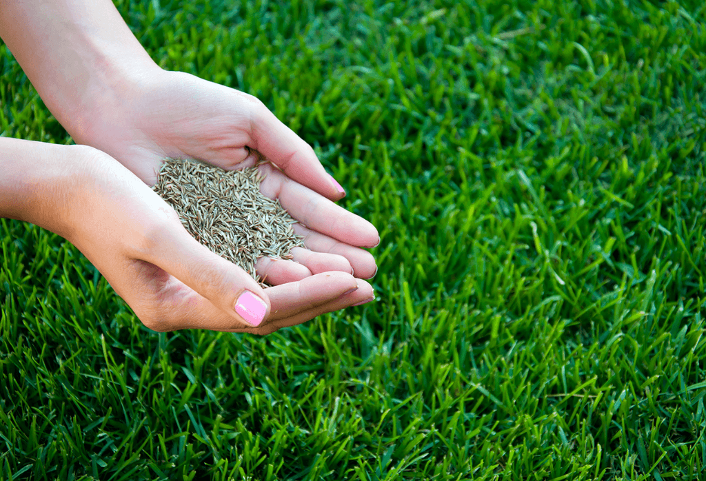 Overseed Your Lawn Correctly