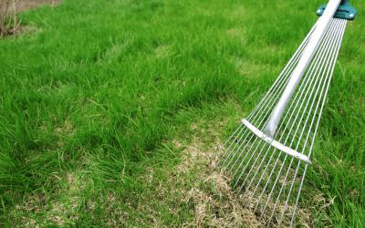 Managing Thatch in a Lawn