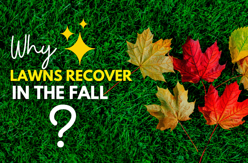 Why Lawns Recover In The Fall Season