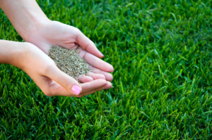 When to plant grass seed