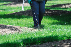 Fall lawn care for weeds