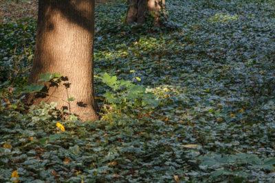 Grass VS. Ground Cover