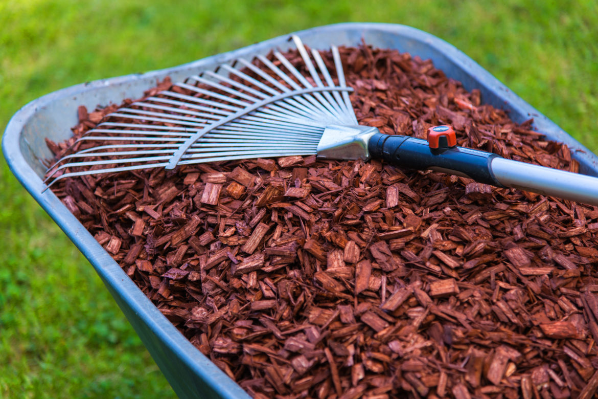 Mulch-What You Need To Know