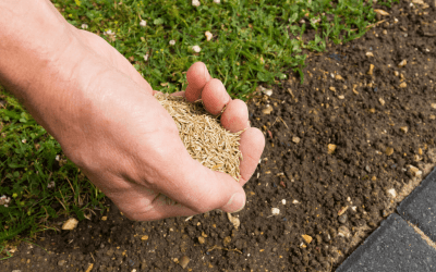Overseeding in the Spring or Fall
