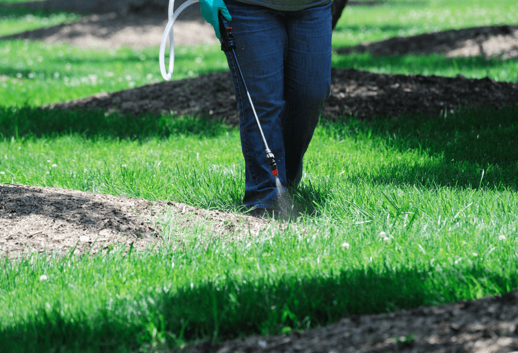 Weed Control for Your Lawn