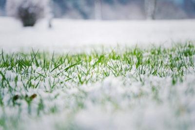 Preparing The Lawn For Winter