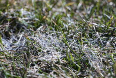 Early and Late Winter Turf Diseases