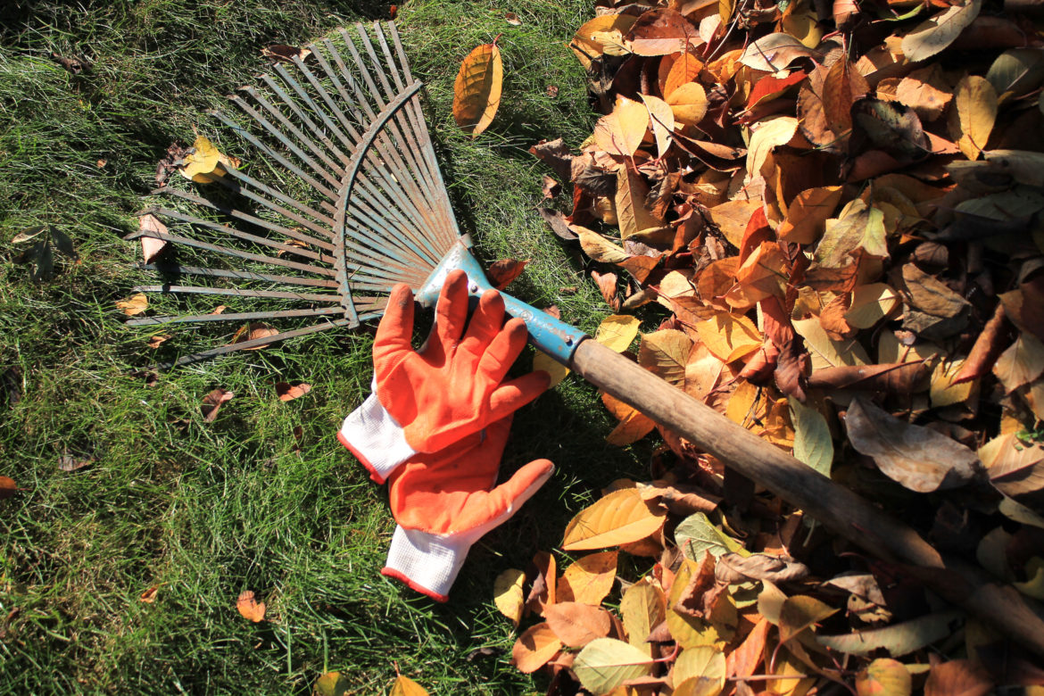 To Rake or To Not Rake; That Is The Question.
