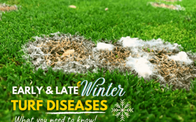 Early and Late Winter Turf Diseases To Watch Out For