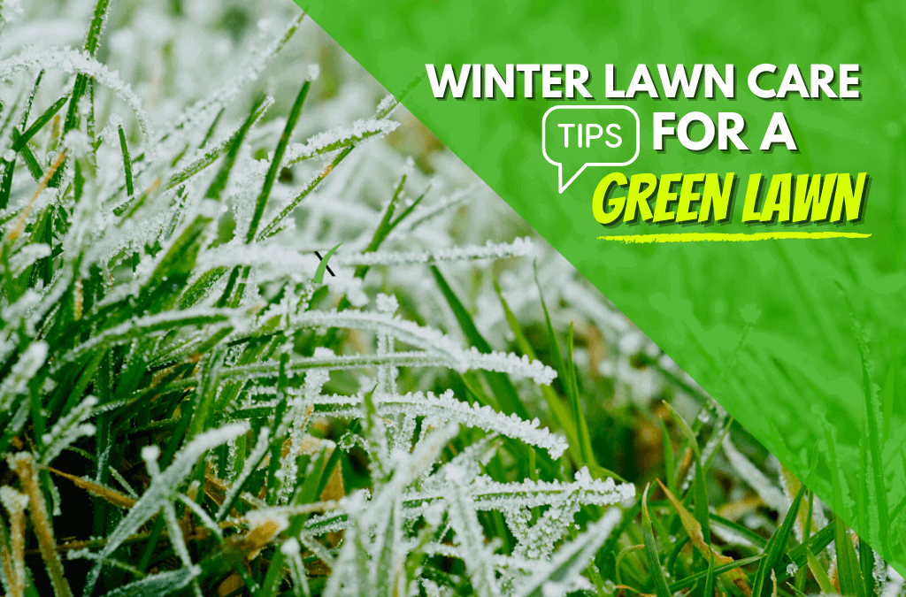 Green Lawns In The Winter