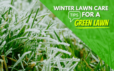How To Get A Green Lawn During Winter