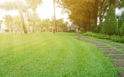 How to Repair a Drought-Damaged Lawn