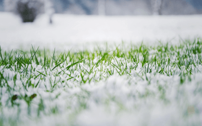Steps to Prepare Your Lawn for Winter