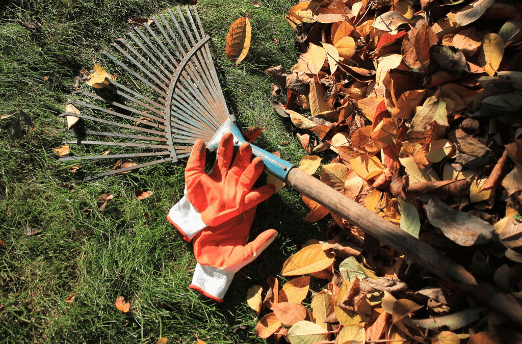 To Rake or To Not Rake; That Is The Question