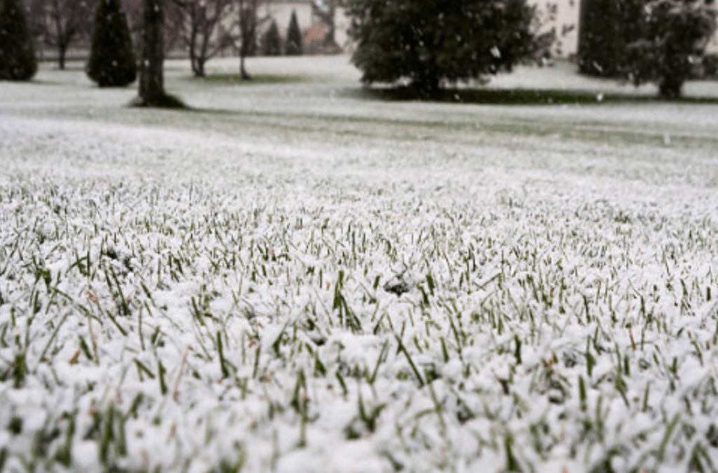 How Cold Winter Conditions Damage Lawns