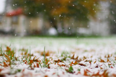 What Is Winterizer Fertilizer and Why Is It Important?