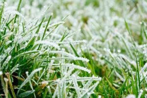When should I put winter fertilizer on my lawn?