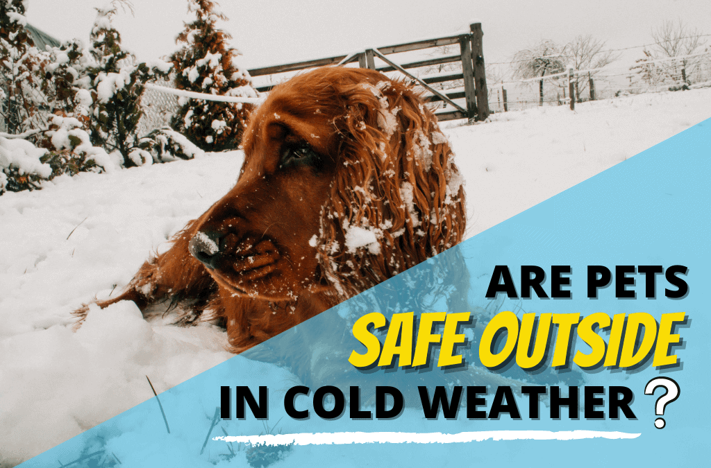Are Pets Safe Outside in Cold Weather?