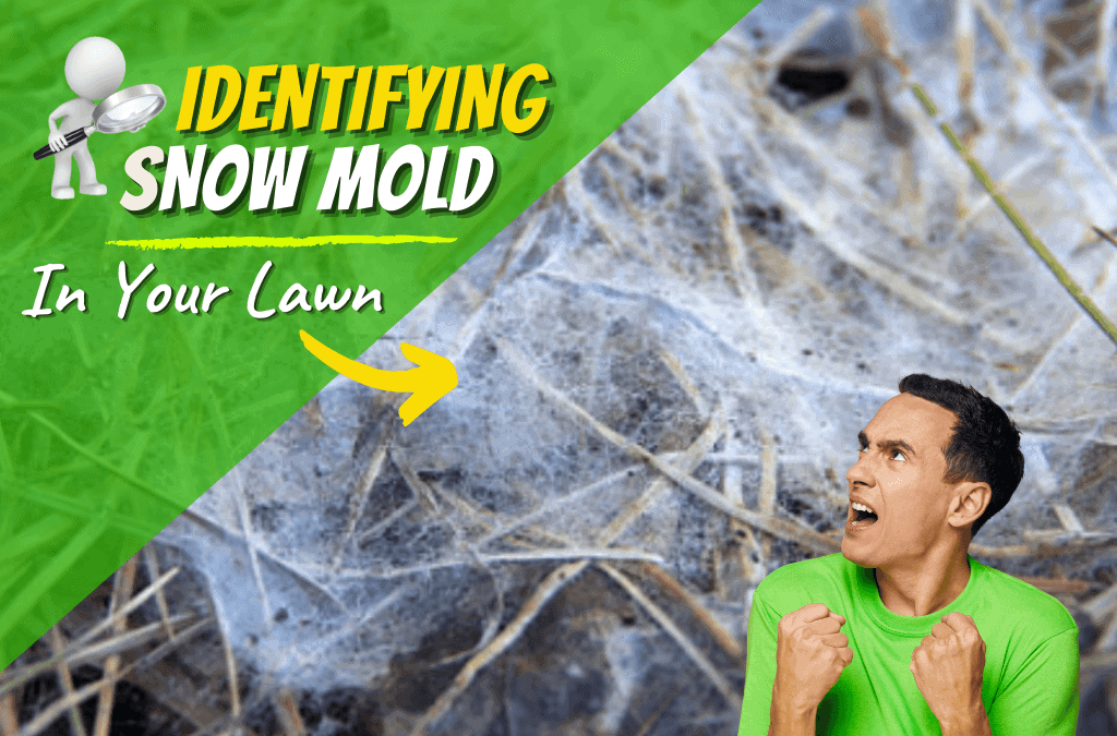 How To Identify and Control Snow Mold This Winter