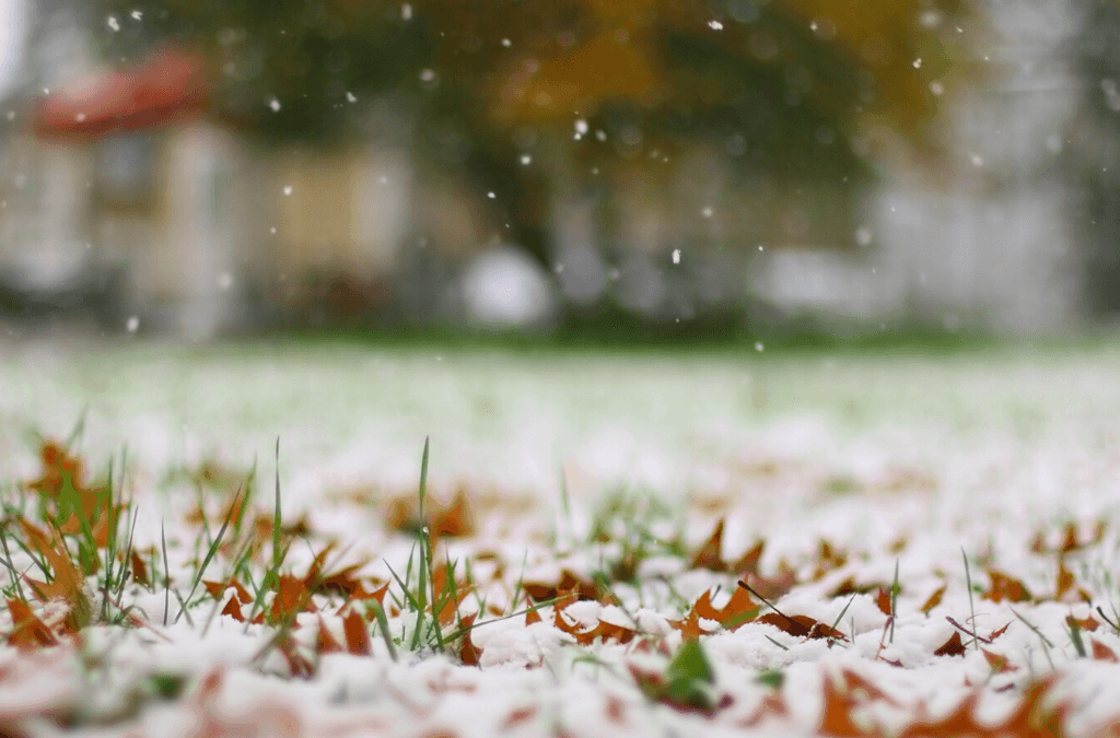 How to Winterize the Grass in Your Lawn