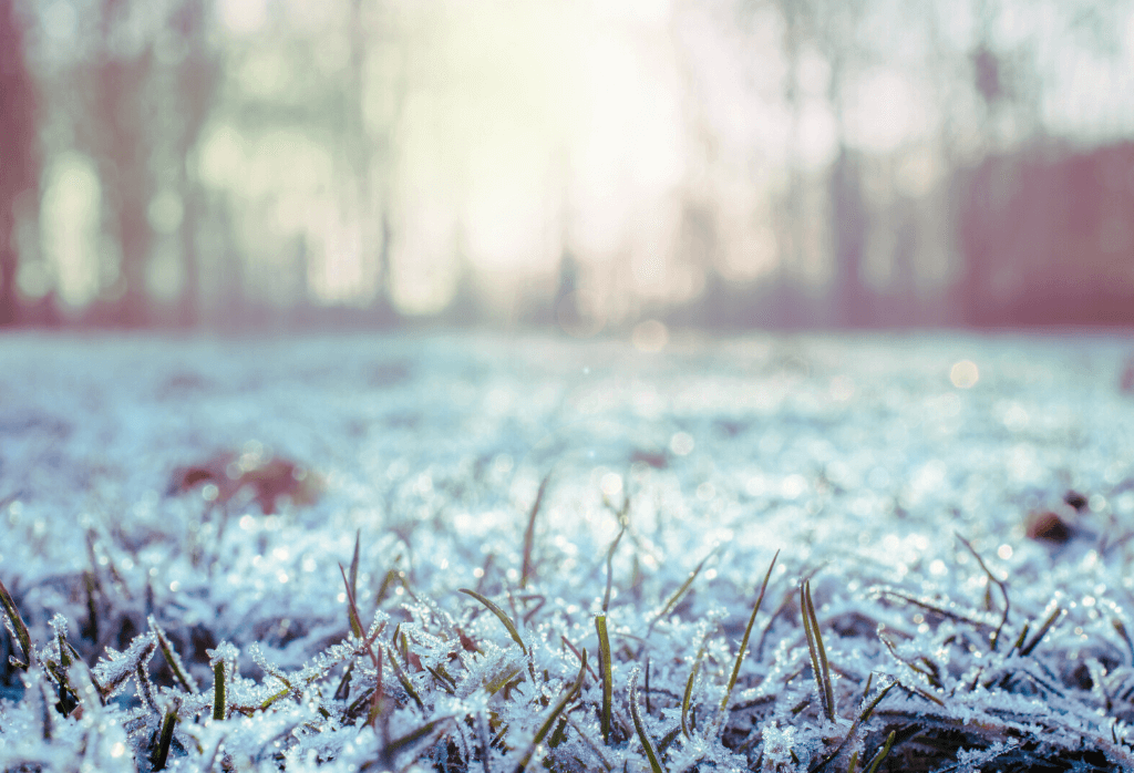 How to Repair Your Lawn from Winter Damage