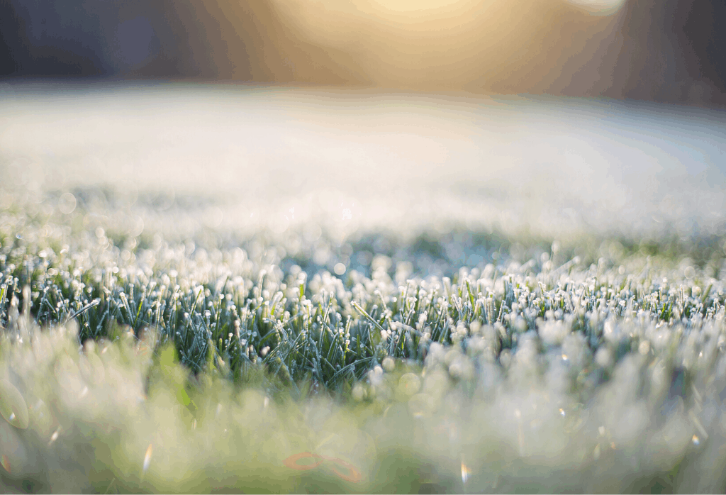 Lawn With Snow